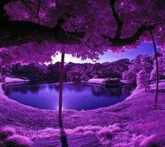 ♥Purples - this is how I picture heaven!
