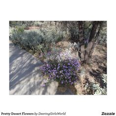 Pretty Desert Flowers Postcard