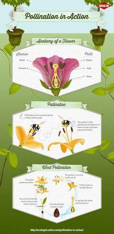 Pollination in Action infographic from The Orkin Ecologist #BugOut