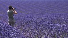 Campi di lavanda - Valensole #Francia #Provenza #lavanda