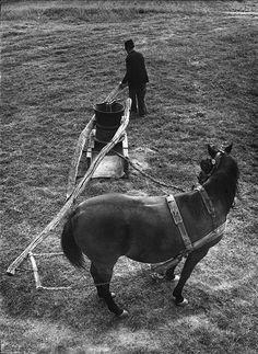 Horses, Traditional, Retro, Animals, Hungary, White People, Animales, Animaux, Animais