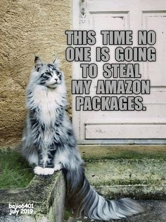 THE LAST TIME WAS THE LAST TIME - LOLcats is the best place to find and submit funny cat memes and other silly cat materials to share with the world. We find the funny cats that make you LOL so that you don't have to. Lol So True, Funny Cats And Dogs, Funny Animals, Funny Kitties, Funny Horses, Adorable Kittens, Kitty Cats, Word Pictures, Funny Cat Pictures