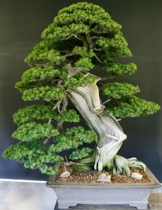 This art form is derived from an ancient Chinese horticultural practice, part of which was then redeveloped under the influence of Japanese Zen Buddhism.
