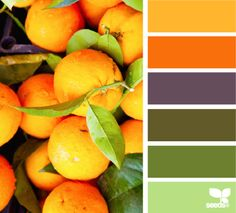 Picked Palette - http://design-seeds.com/index.php/home/entry/picked-palette