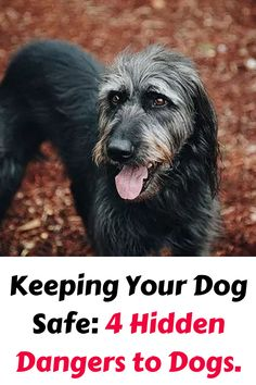 Keeping Your Dog Safe: 4 Hidden Dangers to Dogs. Many of us know the common foods and plants that are toxic to dogs. Dog Runs, Deep Water, Water Quality, Service Dogs, Go Outside, Fleas, Your Dog, Tips, Animals