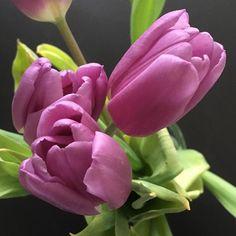 My #obsession with #pinktulips continues. #green_world #colorsplash #garden #urbangardenersrepublic #urbangarden #tulip #tulips #flower #flori #lobotany #flowerstagram #floweroftheday #bestshotz_flowers #instamood #instaflower #instagardeners #pink #green_world #spring #flowermagic #springflowers #nature #tulipano