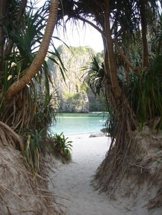 jungle scenery with white sand by the crystal blue ocean sea beach on a tropical island paradise like hawaii Oh The Places You'll Go, Places To Travel, Places To Visit, Travel Destinations, Hidden Places, Magic Places, Adventure Is Out There, Adventure Time, Adventure Travel