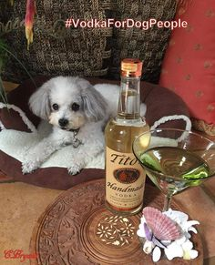 """Vote for your fave Tito's dog. The dog (or dogs) with the most votes will have a handmade cocktail created and named after them. They will be featured in the summer/fall issue of THE NEW BARKER alongside their namesake cocktail. You must """"like"""" THE NEW BARKER page for your vote to count. Voting begins May 2 and continues through May 14 2017."""
