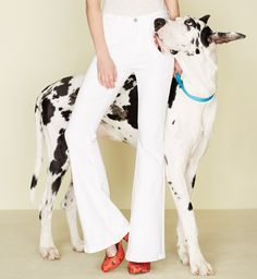 Anthropologie white jeans (and an awesome Great Dane)
