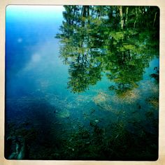 Reflections from a Massachusetts pond.