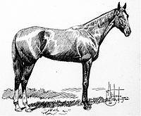 His Eminence | Winner of the 27th Kentucky Derby | 1901 | Jockey: James Winkfield | 5-Horse Field | $4,850 prize