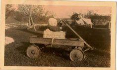 Vintage Antique Photograph Adorable Baby in Box in Asco Flyer Wagon on Farm 3 | eBay