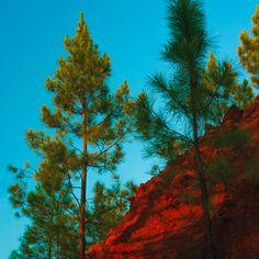 Trees - 2012 - Rio Tinto - Foto door Mark van Laere