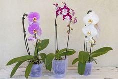 COME CURARE LE ORCHIDEE | Fatto in casa da Benedetta Interior Plants, Glass Vase, Rose, Diy, Home Decor, Gardening, Hobby, Anna, Education