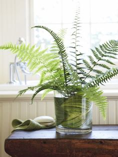 Moisture-loving ferns are naturals in humid bathrooms. For this tubside creation, set a florist's frog inside a low cylinder vase (line the vessel with a hosta cutting to hide the frog). Position fronds so they're slightly separated, allowing light to filter through the lacy leaves.