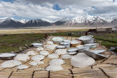 Bowls and cakes of kurut are spread out to dry. The product is made by boiling yak milk for hours over a low fire until it's reduced to a paste, forming it in containers or shaping it by hand into cakes, then placing the kurut on mats or rooftops to dry. Once hardened, the dry cakes can be stored for use in the winter, when fresh milk is less plentiful. They're steeped in hot water to rehydrate them. They can be kept in your mouth for hours too, like a local shepherd's chewing gum.