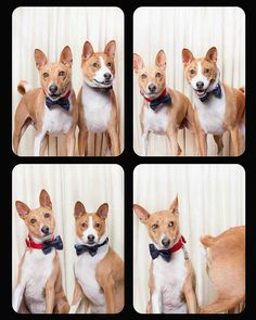 Image source: Lynn Terry rescued dogs in a photo booth! Dog Photos, Dog Pictures, Animal Pictures, Cute Puppies, Cute Dogs, Animals And Pets, Cute Animals, Funny Dog Faces, Silly Dogs