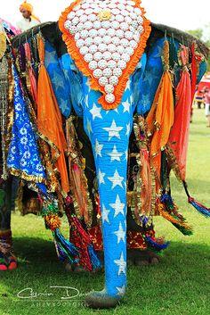 Elephant Festival (Cosmin Danila Photography)