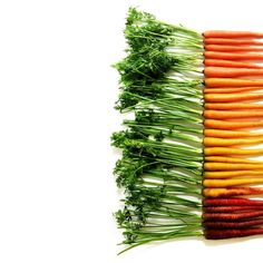 """Carrots have stayed strong being my favorite vegetable for quite a while now. #foodgradients"""