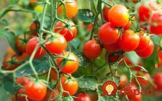 When you're starting your garden, use Epsom salt to help the seeds germinate! Just add tablespoons per seed hole or 1 cup of Epsom salt for every 100 square feet of tilled soil. If you add some Epsom salt to your soil, then this can help it. Tips For Growing Tomatoes, Growing Tomato Plants, Growing Tomatoes In Containers, Grow Tomatoes, Tomato Seedlings, Easy Vegetables To Grow, Easy Plants To Grow, Organic Vegetables, Culture Tomate