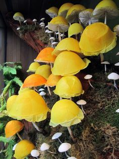 79 best yellow mushroom images fungi mushroom fungi mushrooms rh pinterest com
