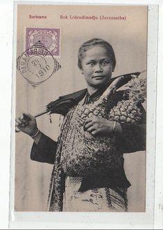 SURINAM - Bok Lokrodimedjo (Javanaise) 1910