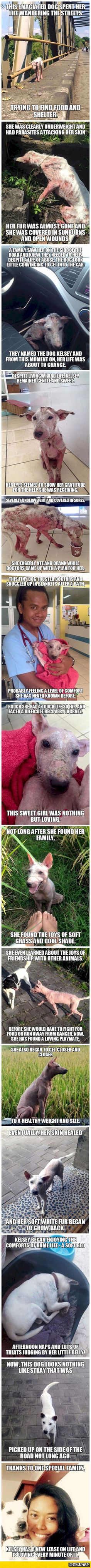 Stories like these give me hope for the millions of animals out there living in horrific conditions like this
