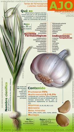 natural health Benefits of Garlic Infographic Health And Nutrition, Health Tips, Health And Wellness, Health Fitness, Fitness Hacks, Nutrition Month, Vegetable Nutrition, Health Lessons, Medicinal Plants