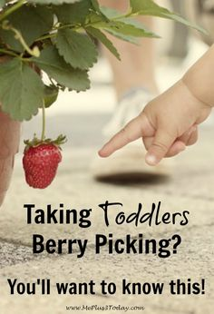 If you plan on taking toddlers berry picking, you'll want to know these 7 tips before you go! So helpful! www.MePlus3Today.com