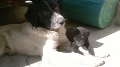 Dog - Baby Street dog.