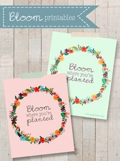 Colorful printables with a great reminder to Bloom Where You Are Planted with livelaughrowe.com