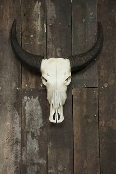 Another great gift, a bit of the old wild west with this horned skull from Hoarde member YARROW 155