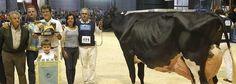 María Jesús Álvarez destaca la calidad del ganado asturiano en concurso de raza frisona