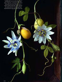 Crepe paper Passion Flower Botanical by Berkeley's Anandamayi Arnold