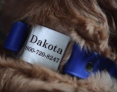 Learn more about the dogIDs Waterproof Dog Collar with ScruffTag nameplate in this video! Get a dog's eye view ; Personalized Dog Collars, Pet Dogs, Pets, Dog Safety, Dog Eyes, Dog Id, Dog Supplies, Dog Food Recipes, Your Pet