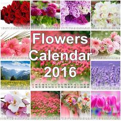 Happy New Year This Beautiful Flowers Calendar 2016 best gift for your new year. Happy New Year 2016, Beautiful Flowers, Best Gifts, Calendar, Life Planner