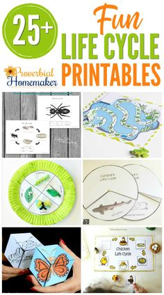 25 Life Cycle Printables your kids will love! All sorts of fun activites to help them understand life cycles and new life in Christ! Science Worksheets, Science Activities, Sequencing Activities, Kindergarten Science, Science Fun, Spring Activities, Science Ideas, Educational Activities, Toddler Activities