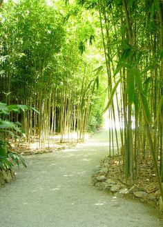 Bamboo Jardin de Villa Rothschild - St. Jean Cap, Nice, France