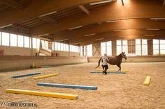 Trail, Horses, Park, Abs, Horseback Riding, Round Round, Animales, Parks, Horse