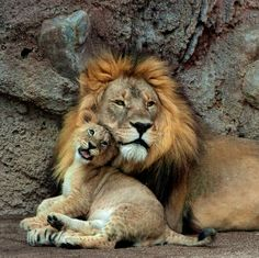 male african lion and  4 month old cub by RoseCollinsArtist, $14.00