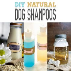 Looking for a wonderful shampoo for your dog? How about checking out this collection of DIY Natural Dog Shampoos...you will find one that is PERFECT!!!!!!!