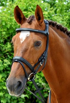This unique Stübben bridle Freedom respects your horse's anatomy and biomechanics. Grants full sight field to your horse The horse's field of vision, whic...