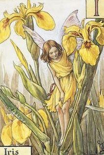 Cicely Mary Barker | The Iris Fairy