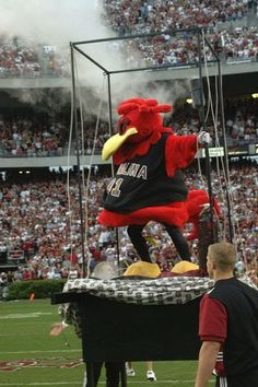 Cocky at Williams Brice Stadium. ~ Check this out too ~ RollTideWarEagle.com sports stories that inform and entertain and Train Deck to learn the rules of the game you love. #Collegefootball Let us know what you think. #Southcarolina #Gamecocks