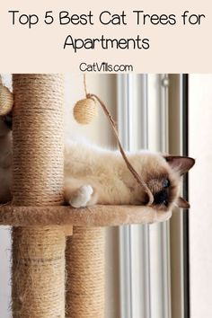 Looking for the best cat trees for apartments? Check out our top 5 picks that fit small spaces, including wall-mounted & modular systems Cool Cat Trees, Cool Cats, Kittens Playing, Cute Cats And Kittens, Cat Friendly Plants, Cat Grass, Cat Lover Gifts, Lovers Gift, Cat Towers