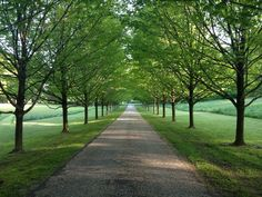 driveway lined with trees