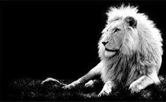 fotografía profesional blanco y negro