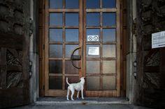 """04. Juli 2017: """"Gläubiger Hund. Mariendom, Linz."""" Mehr Bilder auf: http://www.nachrichten.at/nachrichten/fotogalerien/weihbolds_fotoblog/ (Bild: Weihbold)"""