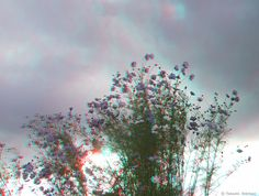 Stereoscopic Photograph by Takashi Sekitani View Photos, Cosmos, Red And Blue, Imagination, Clouds, 3d, Photography, Outdoor, Outdoors