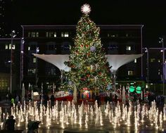 Beautiful tree in Sundance Square in Ft Worth Texas
